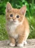 DevOps Cat