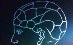 Phrenology brain diagram